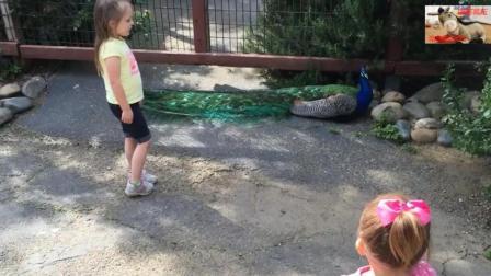 搞笑动物集锦, 两个熊孩子围观孔雀大哥哈哈哈