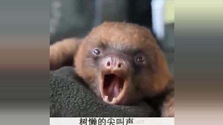 嗨起来! ! ! 动物搞笑视频合集