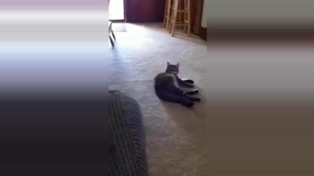 美女直播唱歌 遭到自家猫咪暴打