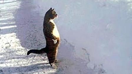 妈~这猫打我, 动物搞笑系列