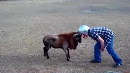 动物搞笑集锦 总有一个笑抽你