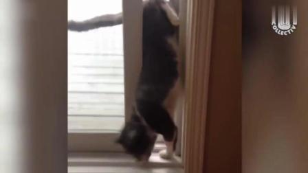 只是虚胖的猫猫狗狗, 动物搞笑视频集锦
