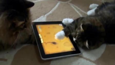 动物玩儿平板搞笑合集1
