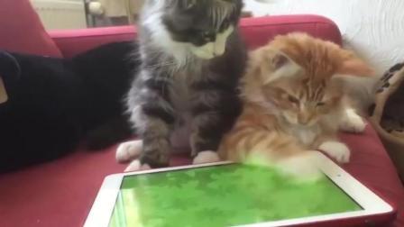 动物玩儿平板搞笑合集2