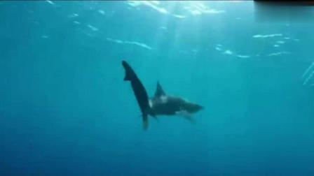 奇闻异事: 下海竟被鲨鱼咬伤, 缝了20多针!