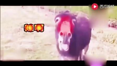家庭幽默录像 动物系列搞笑视频 亮点在那只爱吃