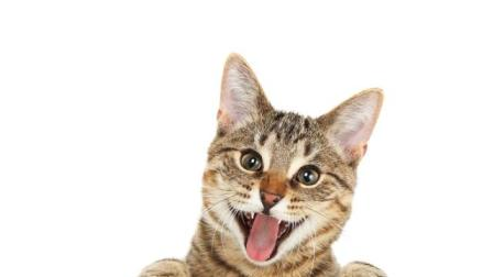 动物搞笑视频 | 让你们看看朕的江山! !