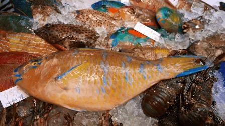 美食猎奇: 深海鹦鹉鱼烹饪, 肉嫩鲜美, 内地有钱
