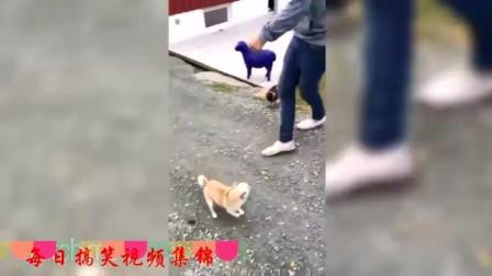 搞笑动物大全, 狗狗猫咪一恶搞根本停不下来!