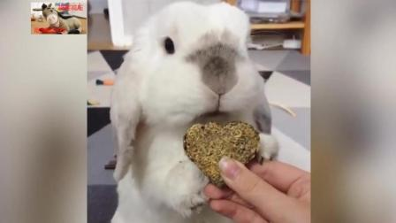 搞笑动物集锦, 这兔子吃东西的样子号销魂哈哈