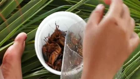 美食猎奇, 柬埔寨人居然把蟋蟀炒熟当食物