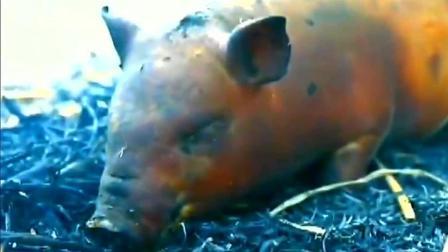 美食猎奇: 正宗烤乳猪如何做?