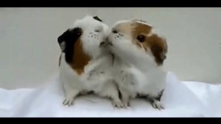 小动物搞笑: 不要和我抢东西吃