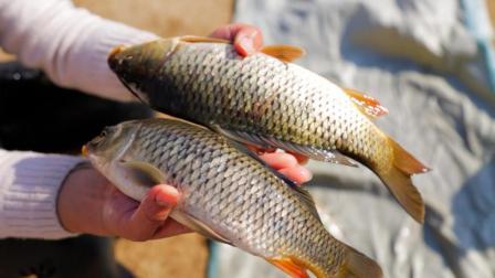 红烧鲤鱼最正宗的做法, 配方和步骤都告诉你, 学会可以直接开店!