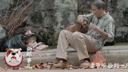 老人家偶遇流浪狗相依为伴, 偶然看到寻狗启示! 结局泪目!