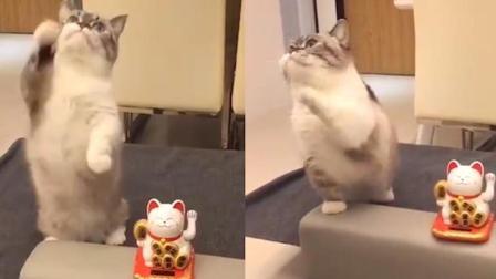 喵!你要的招财猫来了