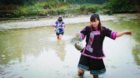 农村鱼塘放干水抓鱼 美女穿着民族服装下水 竟然