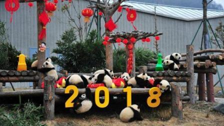 萌!17只小熊猫齐拜年