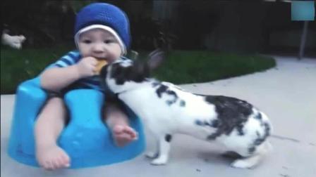 搞笑动物瞬间, 动物世界的疯狂, 吃饭时请咽下在