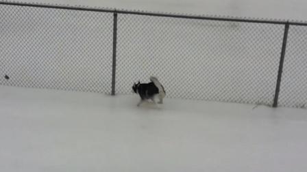 冰雪奇缘搞笑动物版, 不是我站不稳, 是冰面真的