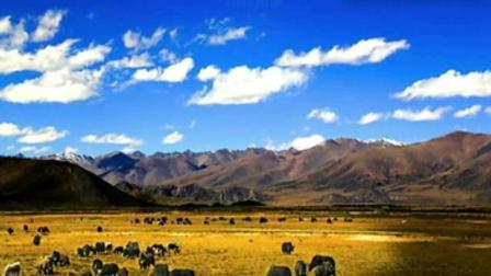 萨克斯《高原红》, 经典藏族歌曲, 奏出无限情怀