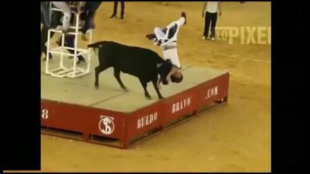 疯狂的公牛!