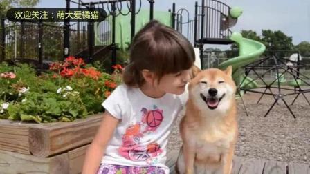 7岁小女孩与柴犬的游戏时间! 柴犬一脸淡定: 你开