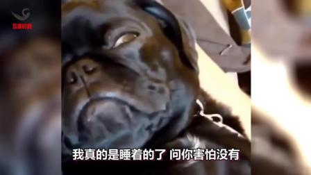 搞笑动物配音, 当动物也来说粤语第 4 弹