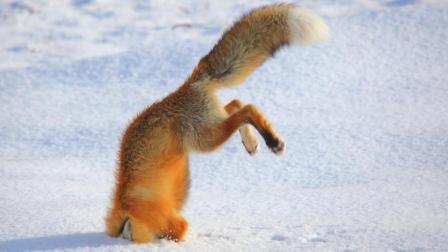 有趣的动物跳跃失败 - 最好的搞笑动物