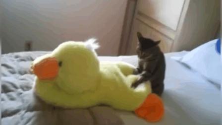 我家那只猫在对小黄鸭做啥! 看来要采取必要手段