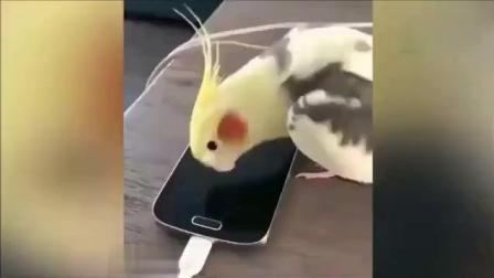 仓鼠: 你再捏我试试? 2018搞笑动物大合集
