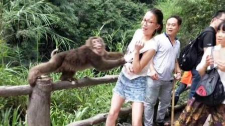 每日一囧 2018 被妈妈逼着去和猴子拍照后 这是被