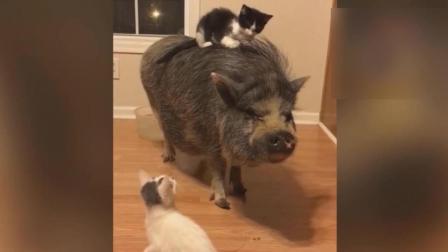 搞笑动物集锦, 追光的猫咪看着好累哈哈