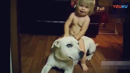 搞笑动物视频集锦, 宝宝爱狗狗萌翻了!