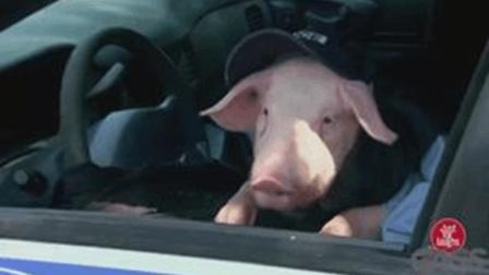 奇趣搞笑视频, 国外街头爆笑恶搞路人, 警车里的