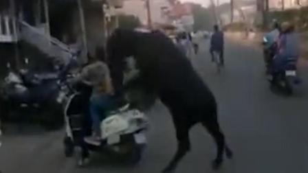 印度一黑公牛扑倒两女子