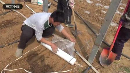 农村小伙, 用这种方法铺地膜, 省事效率高, 4亩地1小时搞定。