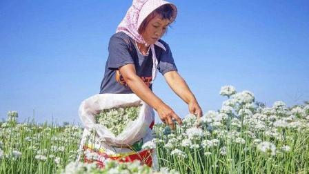 """为什么农民很难富裕起来? 因为有三大""""绊脚石"""", 国家在帮忙挪开"""