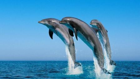 为什么日本宁愿顶着骂名, 也要在全球捕捞鲸鱼?