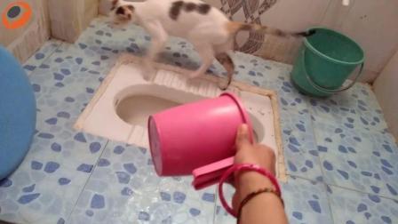 搞笑动物: 家里有只爱刷厕所的小猫