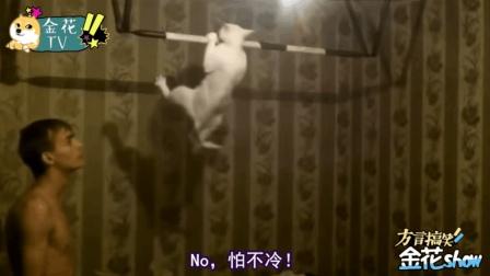 四川方言: 搞笑动物配音, 喵星人成精做引体向上