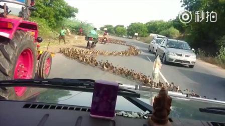 世界级精选搞笑动物过马路集合