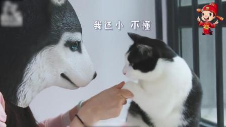搞笑动物: 猫咪看着主人变成哈士奇后…奶牛猫