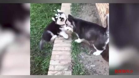 搞笑动物—什么叫好朋友? 当我是一只笨狗时, 你