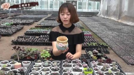 多肉植物花盆选择有技巧,选不好你就是谋杀多肉的凶手视频