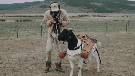美高尔夫球场出新招 用山羊做球童