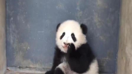 """这就是熊猫界的""""烈焰小红唇""""吧! 好想上去亲一口"""