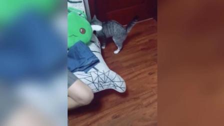 看到最后我要被你笑哭了, 这是一只假猫吧!