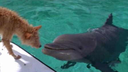 """海豚拯救溺水狗狗, 狗狗获救后竟然亲密""""拥吻""""它!"""