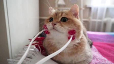 用脸部按摩轮给猫咪按摩, 猫咪: 这伙计按的还不错!